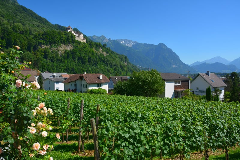 Vineyard in Vaduz, Liechtenstein. wine tasting