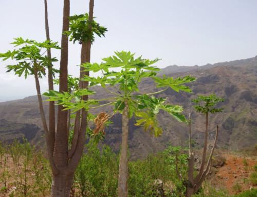 Santo Antao – Cabo Verde: Una Isla para Senderistas
