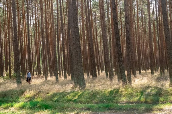 why take a day trip from gdansk? wandering through the forest