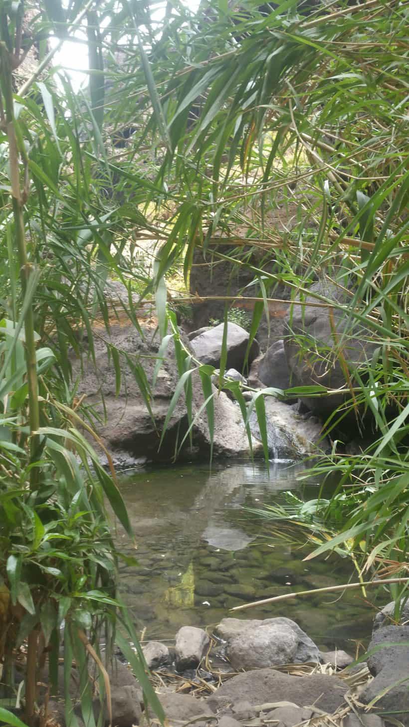 Hidden corners in Masca Canyon - Rincones escondidos en el barranco de Masca