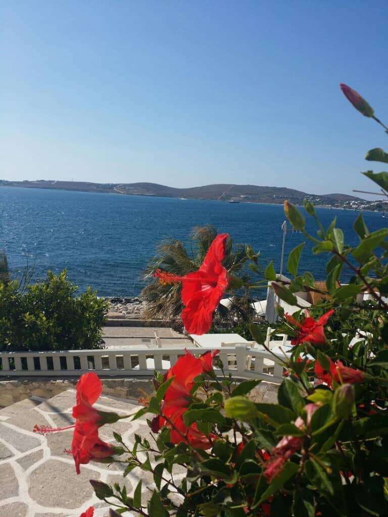 fun things to do in paros island, flowers overlooking the beach in Parikia