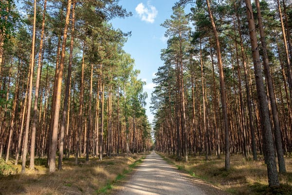best gdansk day trips in poland, tall trees in a forest