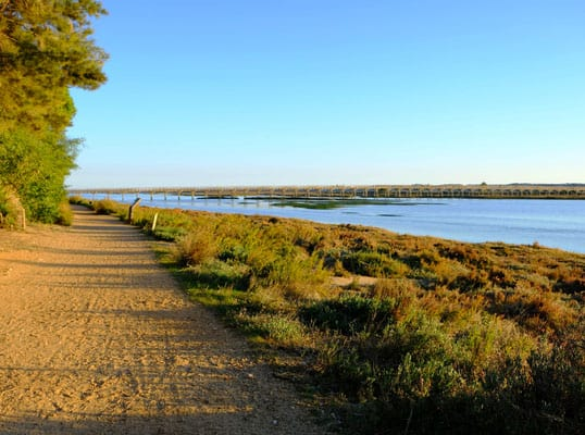 sunny algarve in winter, walking along a hiking path in ria formosa