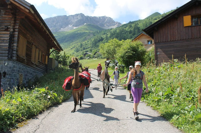 What to do in Liechtenstein, alpaca trekking in the countryside