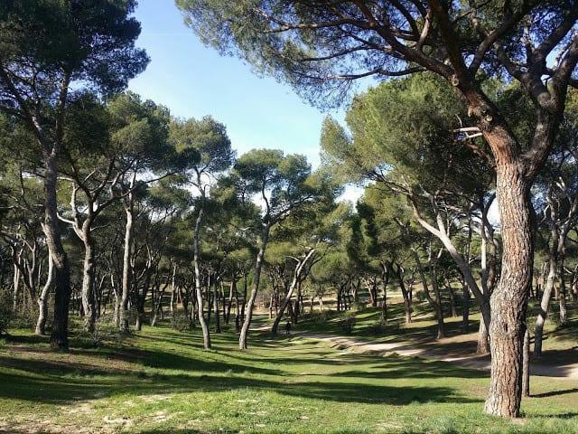Madrid Dehesa de la Villa, excrusion, city travel, park, parque, nature, naturaleza