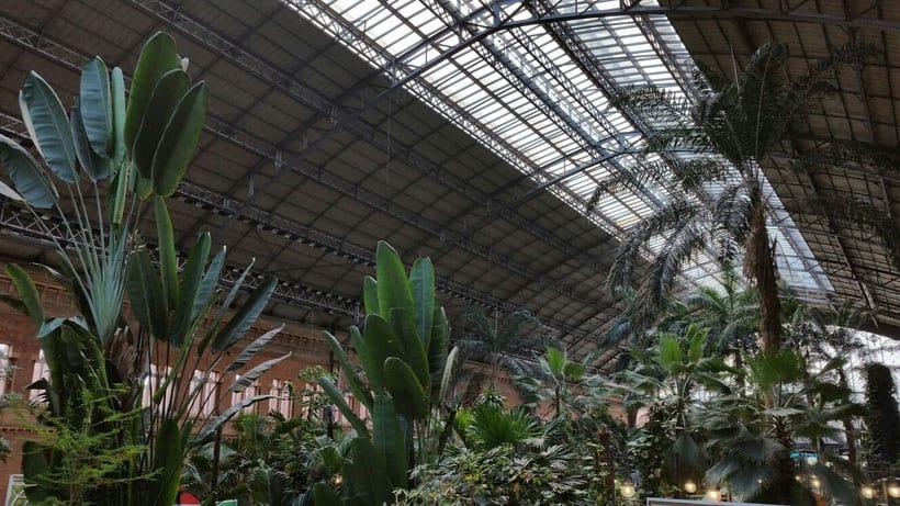madrid, tourism, atocha, tropical, botanic garden, train station, estacion de tren, paulina