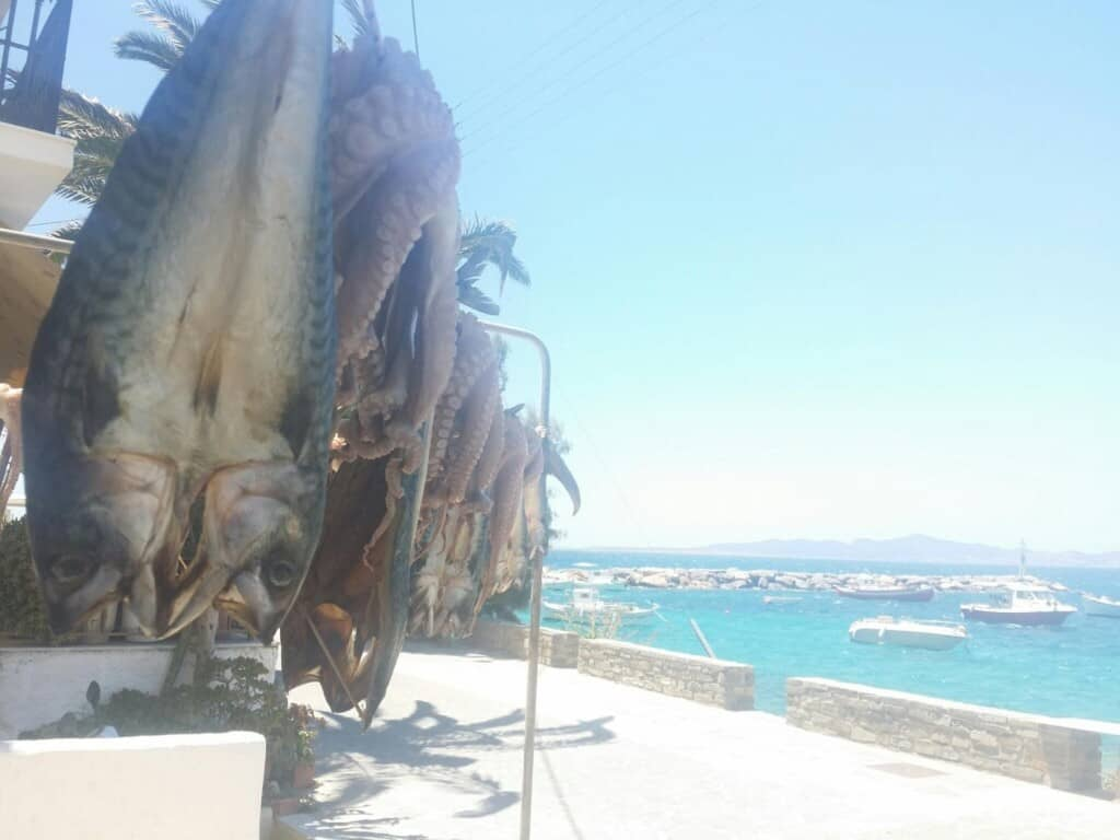 interesting paros attractions, fish and octopus handing in the sun