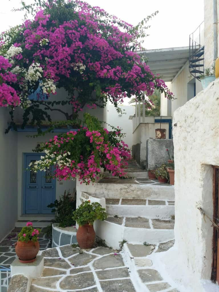 best things to do in paros greece, flowers on the steps of lefkes village on paros island