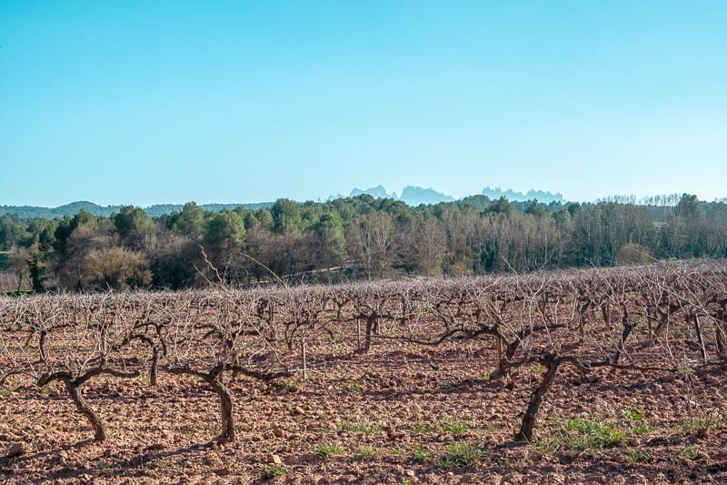 Spanish Orange Wine, best wines from spain