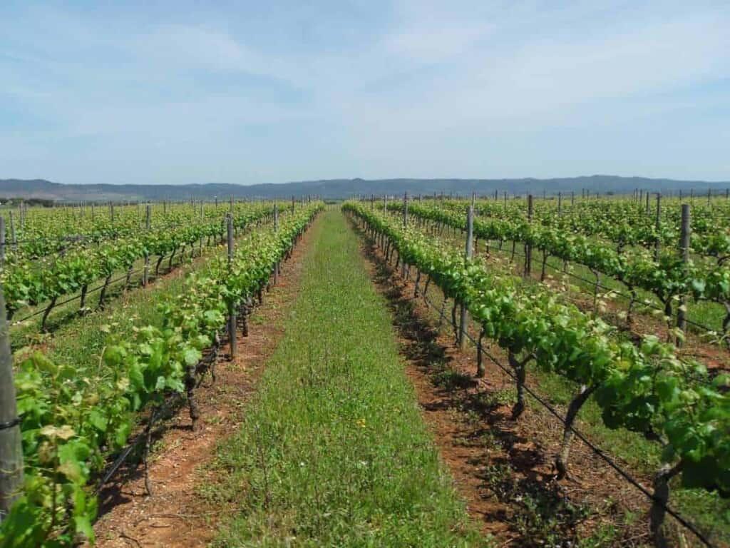 visit alentejo, alentejo wine, costa vicentina, algarve, lisboa