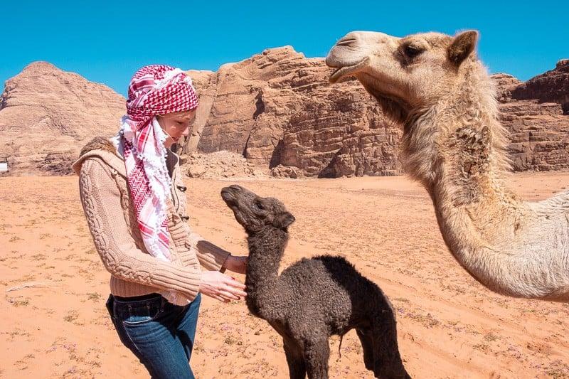 Camels in the Wadi Rum Desert, what to do in wadi rum jordan, things to do wadi rum