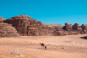things to do in wadi rum, best bedouin camp in wadi rum, desert camp, from petra to wadi rum, aqaba wadi rum, jeep tour, camel tour, hiking, climbing