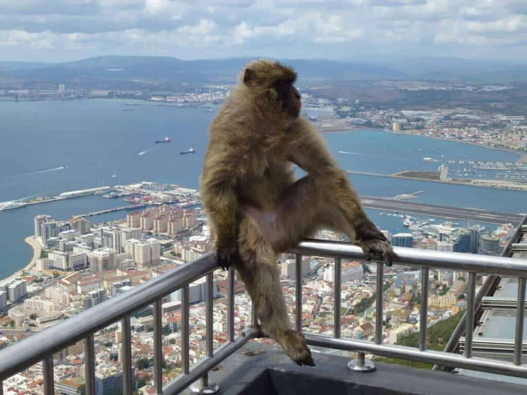 day trip to gibraltar from malaga, monkey sitting on a railing over the city