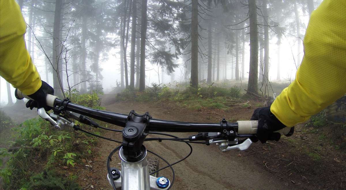 things to do in bialowieza forest, cycling and biking in bialowieza