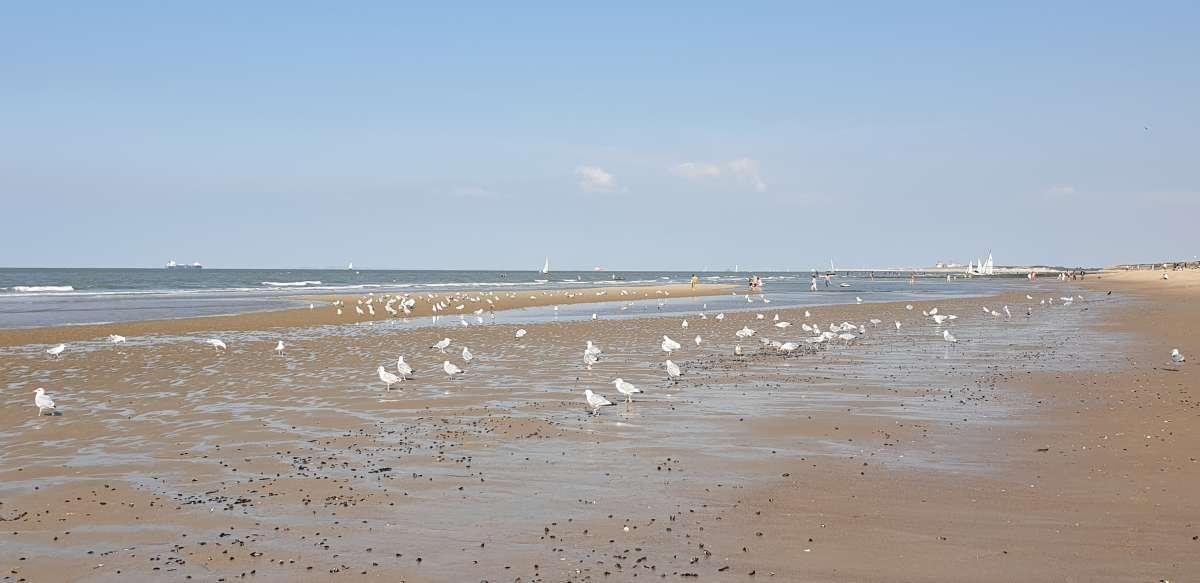 things to do on knokke beach, belgium, belgian coast, belgian seaside, ostende, sluis, bruges, brugge, holidays, day trip from Brussels, gent, zeebrugge, cadzand, hotels in knokke, appartments in knokke