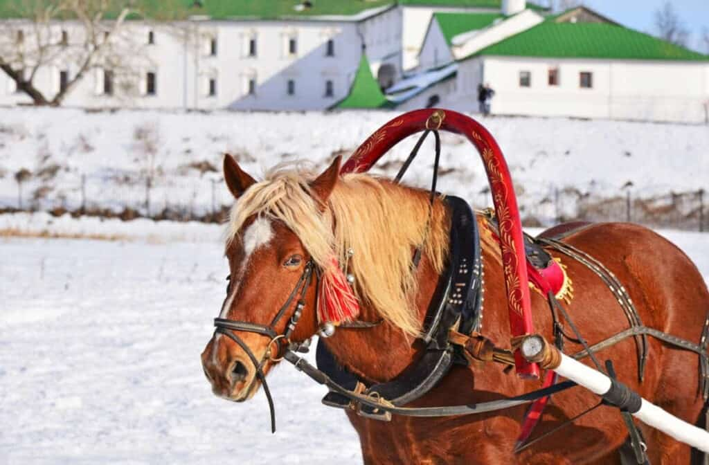 Horse with rich animal harness pulling sleigh in winter. Winter festival in Suzdal ( The Golden Ring of Russia). Snowy cityscape on background.