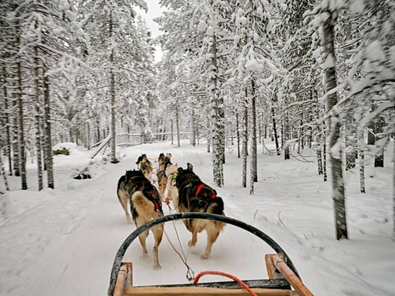 places to visit in wisconsin in winter, dog sledding in Ice fields
