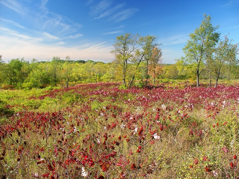 Beautiful hillside of the Kettle Moraine State Forest in Wisconsin.
