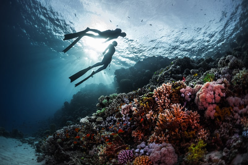 things to do in cape verde, cabo verde, diving in sal, maio