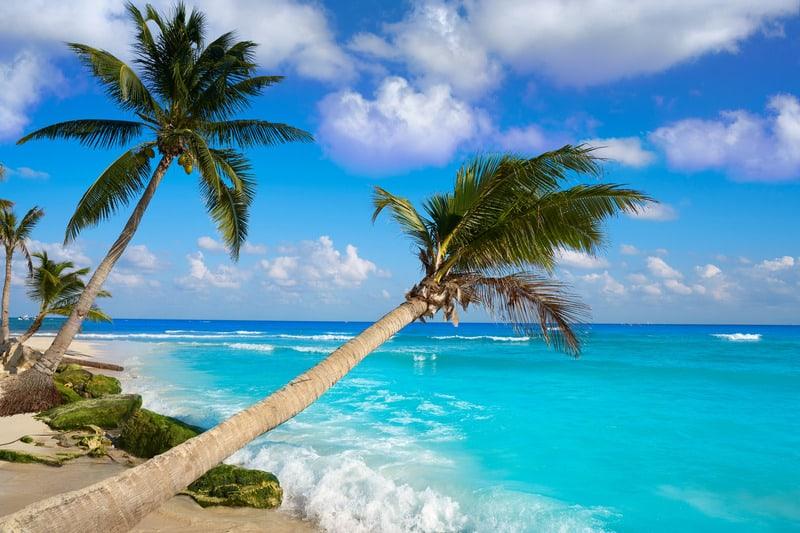 best beaches in riviera maya, palm trees,