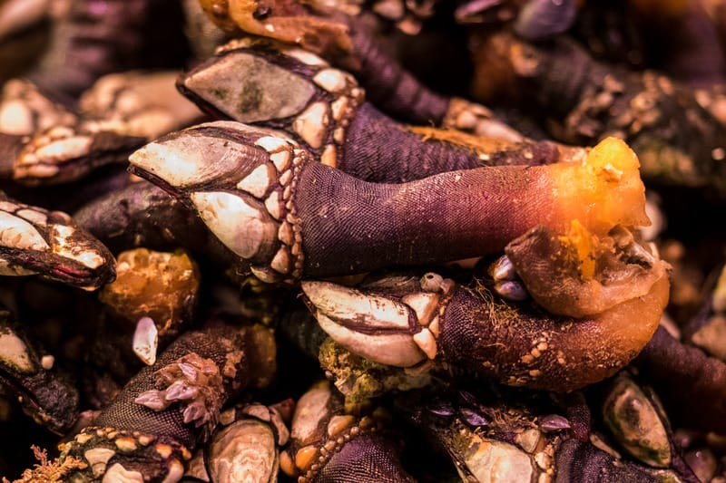 Fresh Percebes, cabo vede food, things to eat in cabo verde