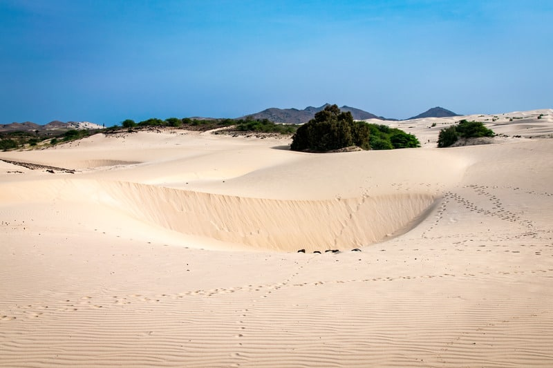 Arid sand environment of the edge of the Viana Desert, Boa Vista in front of lush green forest, Cape Verde