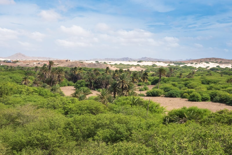 things to do in boa vista, cape verde, Oasis near Viana desert, Boavista - Cape Verde