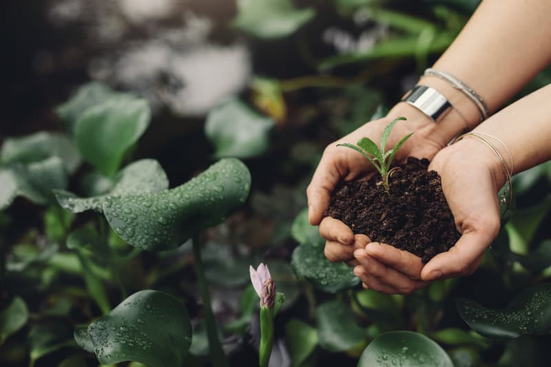 Close up image of female gardener hands holding a sapling at greenhouse. Woman planting new plant in the garden center, How to Support Small Business, How to help Small Business, local shops, small entrepreneur