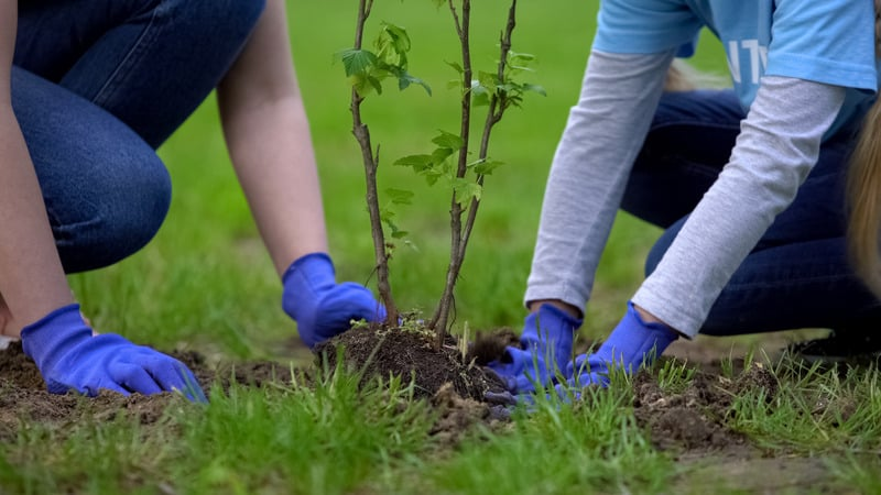 Staycation Ideas for Couples, Two volunteers planting tree together