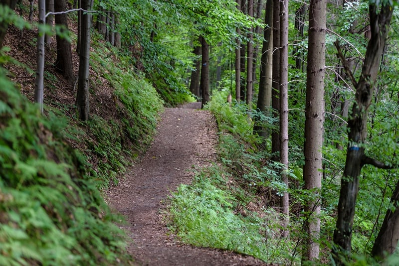 Things to do in Northern Wisconsin, The forest road among green trees in the mountains