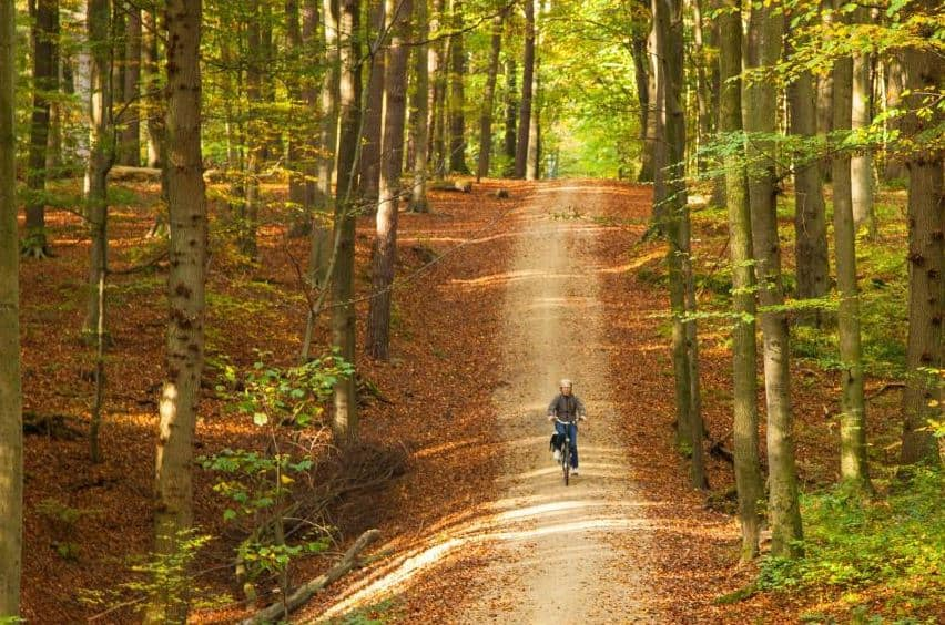 Hiking in Brussels, Cycling between the roads in the forest