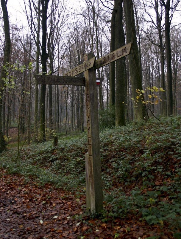 Easy walk and  nature trail in Belgium,, Forest view Scheldeland (GR122)