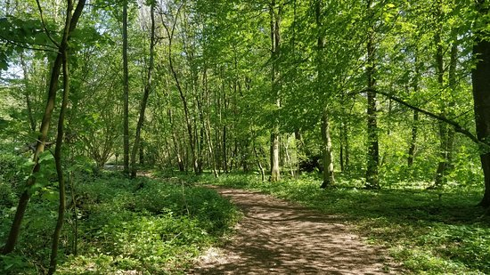 Best tour in the Sonian Forestin in Brussels, view of Sonian Forest