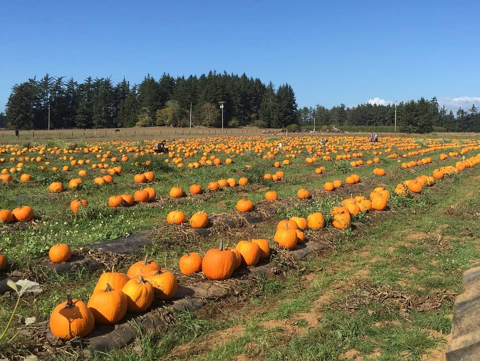 best things to do in Kenosha, best view of Pumpkin Farm
