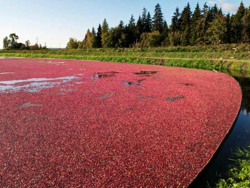 cranberry bog wisconsin fest fall