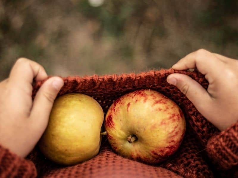 fun things to do in milwaukee for couples, harvest fest fall wisconsin apples