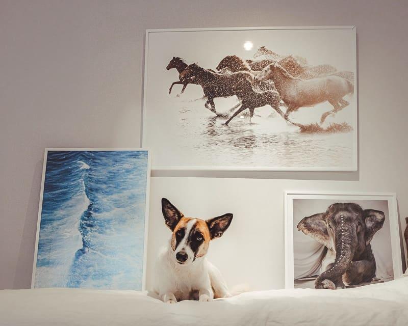 nature art prints