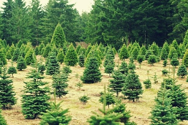 Things to do in wisconsin in december, View of Christmas Tree Farm