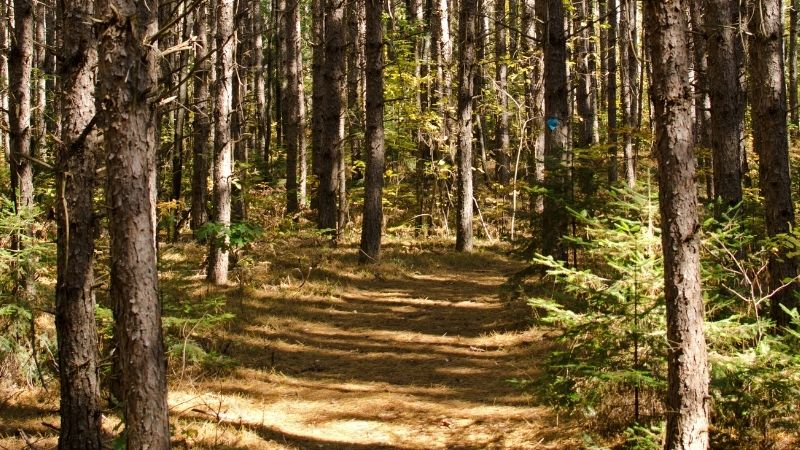 Best Mountain Bike Trails in Northern Wisconsin,  forest view of Nicolet Roche Trail – Langlade County