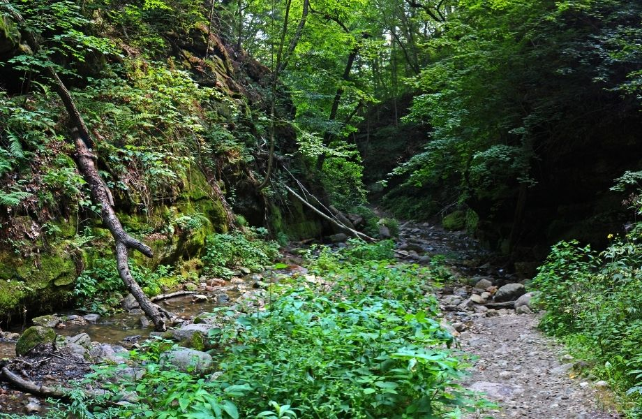 top Wisconsin Dells hiking locations, trees and rocks surrounding river at Parfrey's Glen Trail