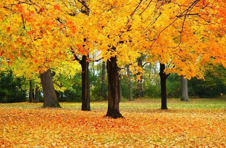 best all colors in Wisconsin, Fall foliage in Wisconsin park