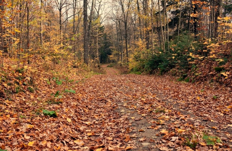 Hiking in Door County, Wisconsin forest path in fall