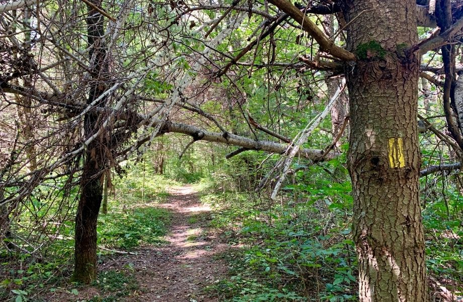 best hiking in southern wisconsin, segment of Ice Age Trail with yellow market on tree and a fallen branch