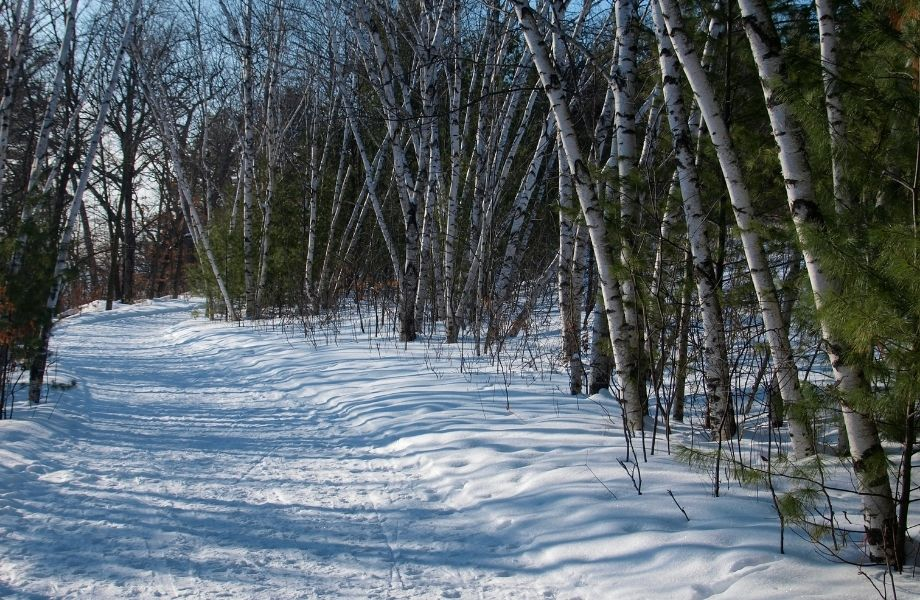 best snowmobiling in Wisconsin, snowmobile trail lined with trees